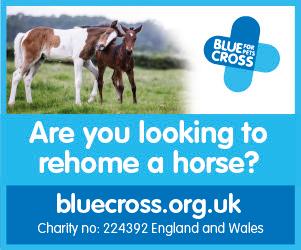 Blue Cross 2020 B (Nottinghamshire Horse)
